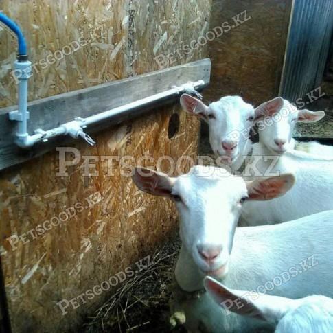 Ниппельные поилки для коз