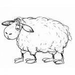 Продажа поилок, бирок для овец